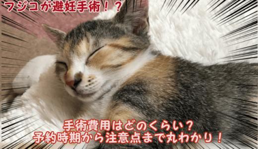 猫の避妊手術費用はどのくらい?予約時期から注意点まで丸わかり!