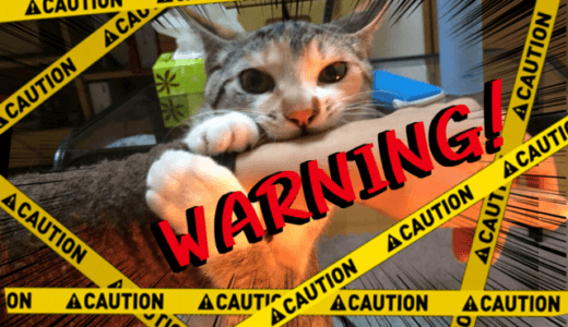猫が噛むのはかまってほしい意思表示!遊んでほしくて凶暴化する猫にはおもちゃで対処